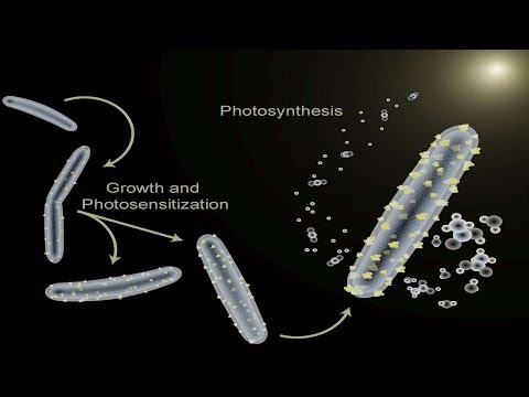 Cyborg Bacteria: supply the green fuel source from sunlight.