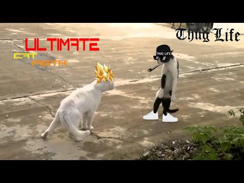 briga de gato mutante 1  ultimate cat figth narrado pelo google tradutor