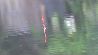 Карась Ловля карася весной Рыбалка на поплавок