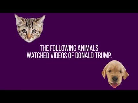 Animals react to Donald Trump
