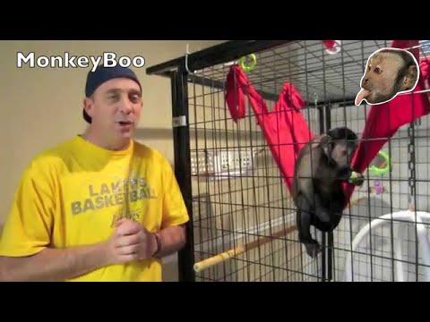 Capuchin Monkey Dinner