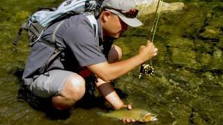 Fishing with Rod:  Tiny creek, big cutthroat
