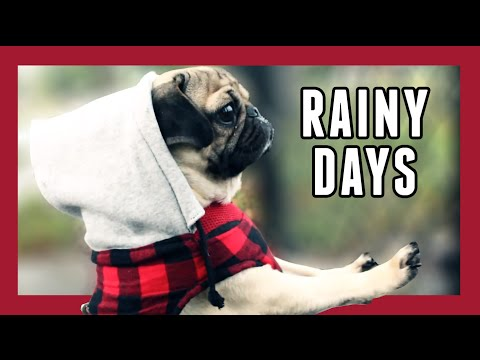 Rainy Days | Doug the Pug
