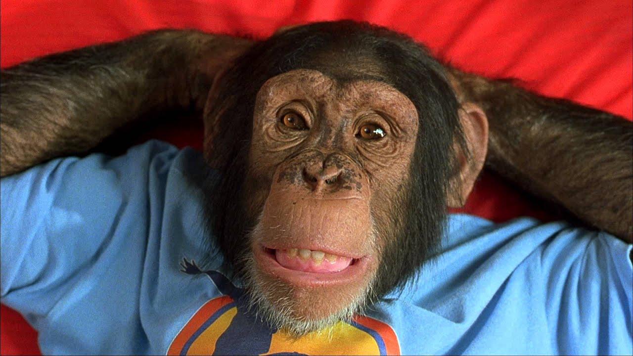Download MXP Most Xtreme Primate - Trailer