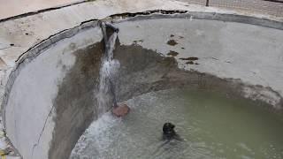 ЭКСТРЕННЫЙ ВЫПУСК ! Тюленю  Маэстро неизвестные люди  вылили какое-то вещество в бассеин !