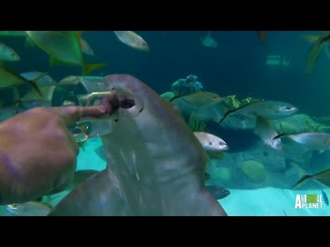 Reveal: Aquarium Encounters | Tanked