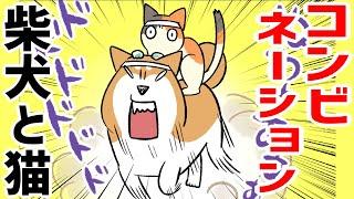 【犬猫まんが】柴犬と猫の笑えるコンビネーション
