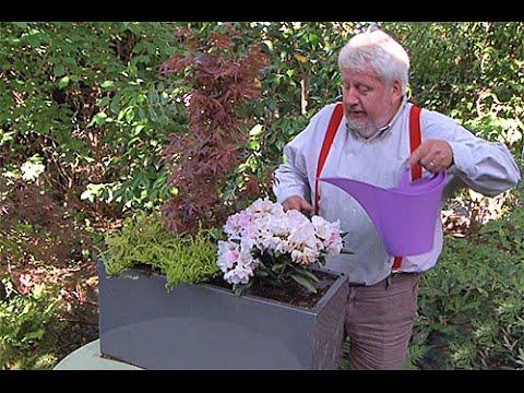 Comment composer un bac de plantes de terre de bruy re youtube - Plante de terre de bruyere ...