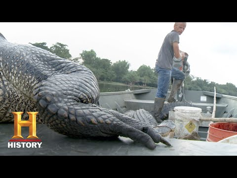 Swamp People: Willie Rides the Heatwave to Success (Season 9, Episode 8) | History
