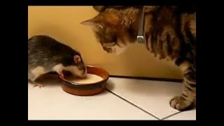 Funny Cats and Cute Kittens - Funny Cat 2018