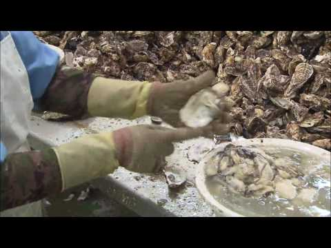 Oyster Exports to Russia