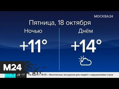 """""""Погода"""": надолго ли в столицу пришла солнечная погода - Москва 24"""