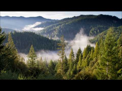 Forest Nature Images With Music HD Relaxing Amazing