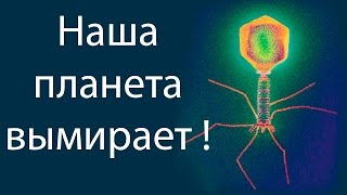 Наша планета вымирает ! ( Plague Inc: Evolved )