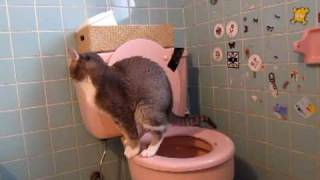 I TRAINED MY CAT TO POOP IN THE TOILET!!