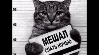 Фото Кошек под Музыку! Коты Приколы! Кошка Прикол