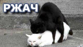 Ну Очень Смешные Котейки! Няшки