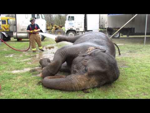 Elephant Wash - MVI 4038