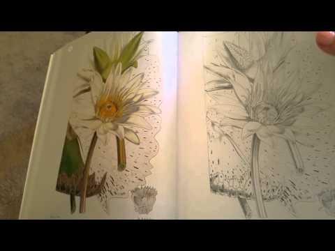 kew-gardens-exotic-plants-coloring-book