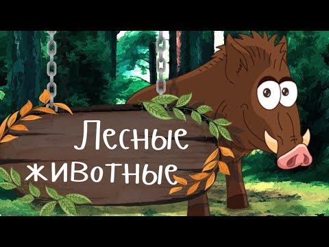 Мультфильм животные леса
