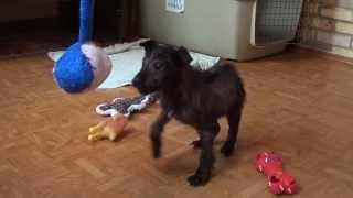 Новогоднее чудо для бездомного щенка Снуппи!