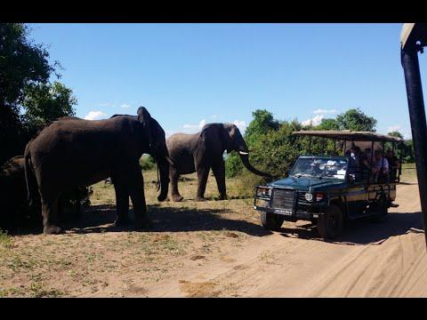 Botswana Safari Chobe 2