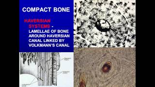 9. Cartilage and Bone
