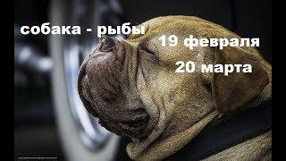 информация  для собаководов. ОСОБЕННОСТИ характера собаки - РЫБЫ