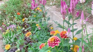 《秋の花の植え付け》ガーデニング*ボサボサだったハーブの花壇を秋の花咲く花壇へ《T's Garden》