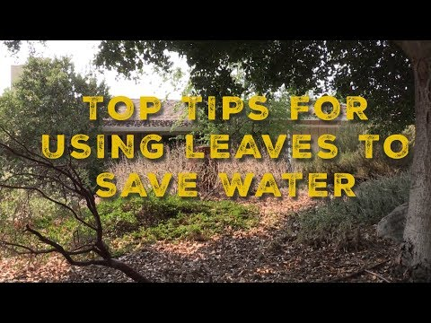 Conservation Quick Tips: Using leaves to save water