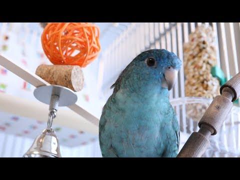 DIY Toy Making Kit for Birds Linnies 'WASABI'
