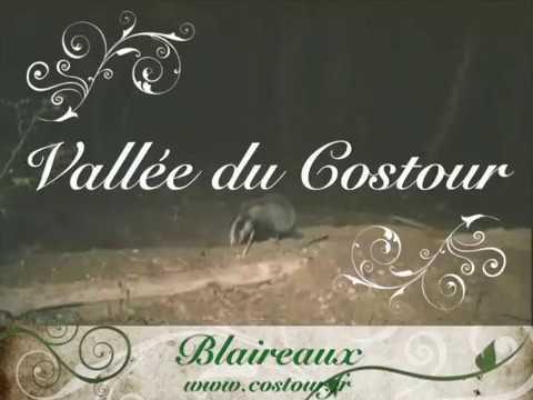 Blaireaux Vallée du Costour Brest