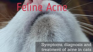 Cat Acne - Black Dirt Like Specks on a Cats Chin