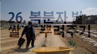 26. 복분자밭 쌀겨 뿌려주기 [2017. 04. 25…
