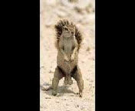 squirrels nuts dancing
