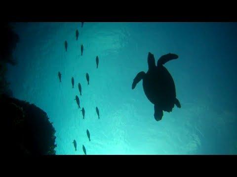 Cayman Islands - Little Cayman Beach Resort  | Scuba Diving, Little Cayman, Part 2