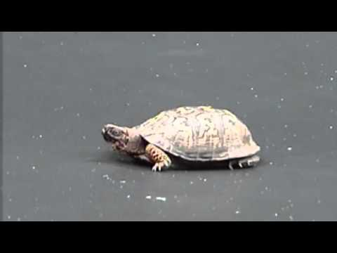 Dog Helps Turtle Jump On The Trampoline