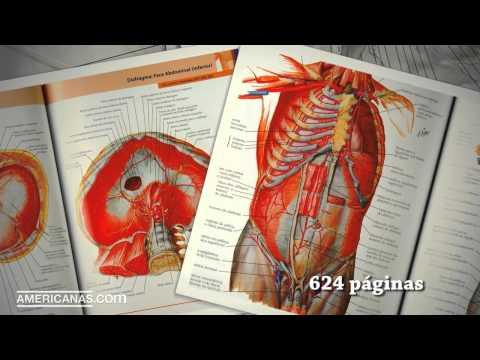 americanas.com- -livro---atlas-de-anatomia-humana