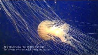 Chinese Lesson - Georgia Aquarium and Sea Animals