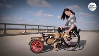 כנרת לא הסכימה להרדים את הכלב האהוב שלה, וקנתה גם לו כיסא גלגלים