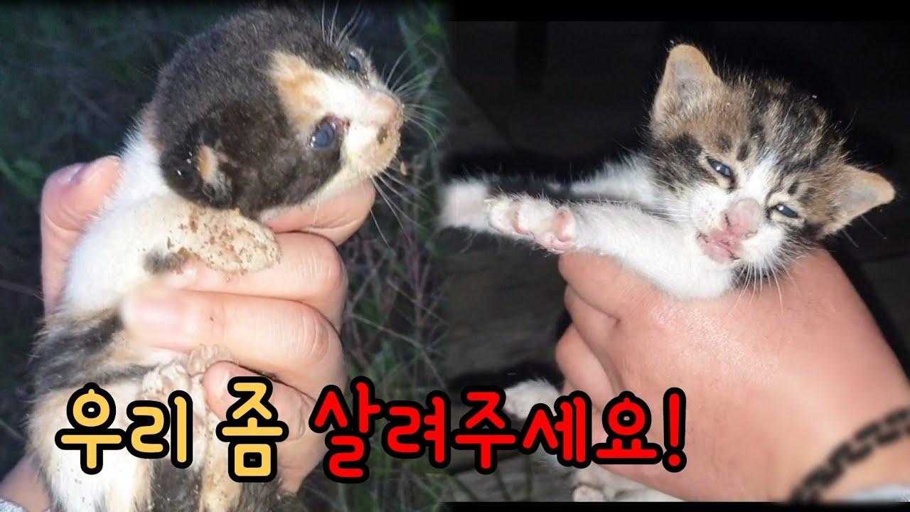 추운 허허벌판에 새끼고양이들이 버려졌어요[고양이탐정]Kittens were thrown away in the cold wilderness.