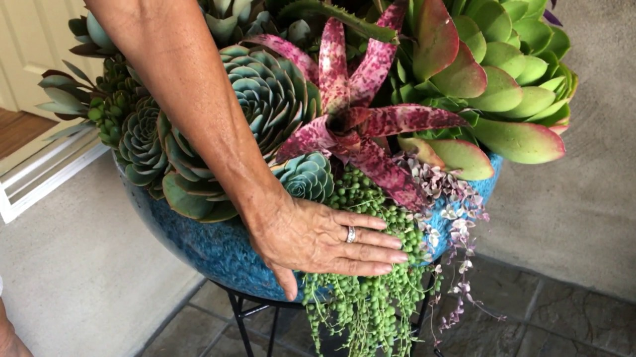 Potted Succulent Arrangements Youtube
