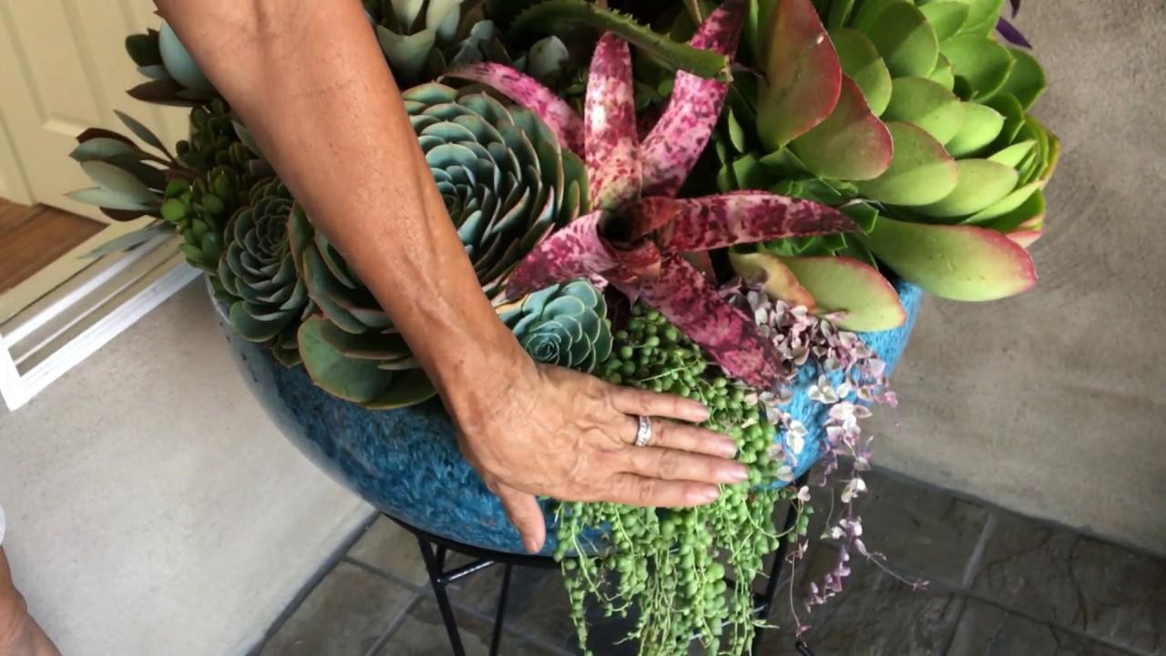 Potted Succulent Arrangements - YouTube
