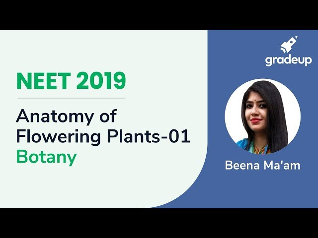 NEET Anatomy of Flowering Plants - 01 | Botany Live Class | Boost Your Rank 2019