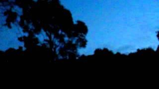 オーストラリア鳥の鳴き声1