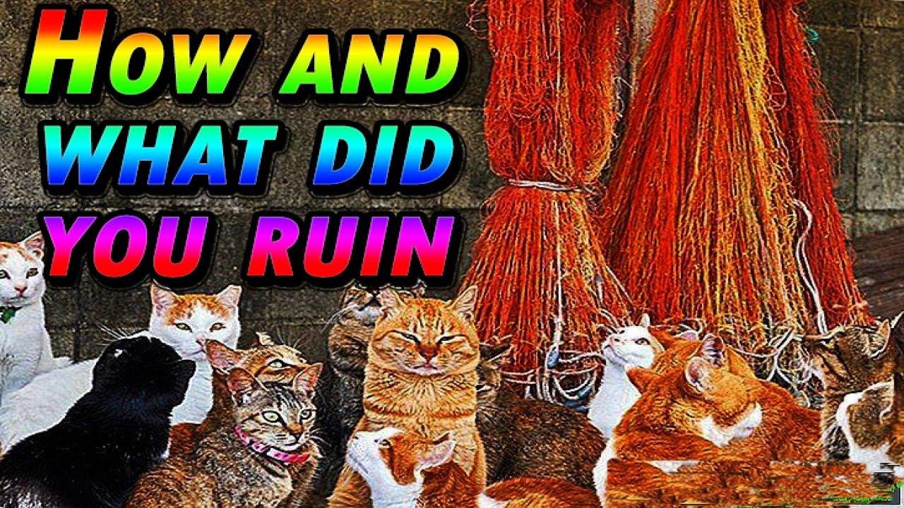 قطط الشوارع شاهدوا تخريبها Watch what the cats have done to ruin  street  cats