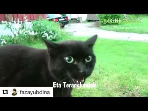 ETA TERANGKAN LAH VERSI KUCING/CAT VERSION