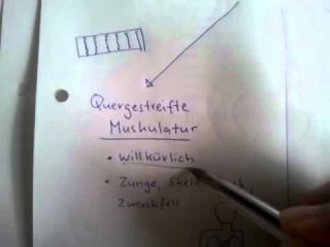 Muskelgewebe - YouTube