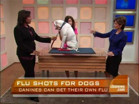 Dog Flu Explained