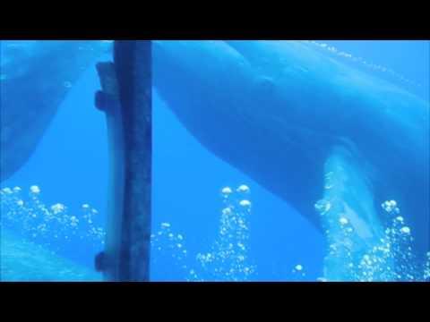Amazing Humpback Whale Encounter With Atlantis Submarines